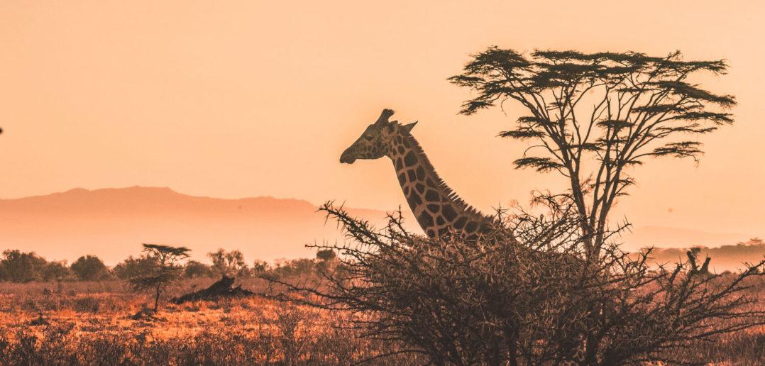 KI, Geofencing und Co. – Tierschutz im Zeichen der Digitalisierung 2