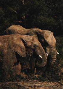 KI, Geofencing und Co. – Tierschutz im Zeichen der Digitalisierung 4