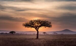 KI, Geofencing und Co. – Tierschutz im Zeichen der Digitalisierung 3