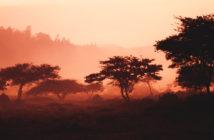 Bargeldlos bis 2020: Mobile Payment in Ruanda 7