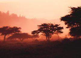 Bargeldlos bis 2020: Mobile Payment in Ruanda