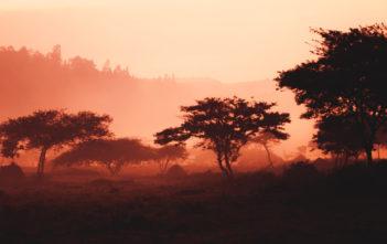 Bargeldlos bis 2020: Mobile Payment in Ruanda 2
