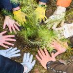 CO2-Kompensation – Star Finanz engagiert sich für Aufforstung und Umweltschutz 5