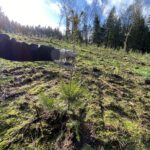 CO2-Kompensation – Star Finanz engagiert sich für Aufforstung und Umweltschutz 11