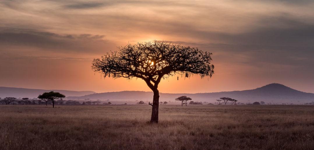 Unser Star in Afrika – Teil 2: Arbeitsschwerpunkte und Buddha-Tempel 3
