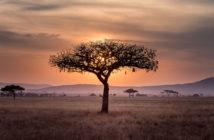 Unser Star in Afrika – Teil 2: Arbeitsschwerpunkte und Buddha-Tempel 8
