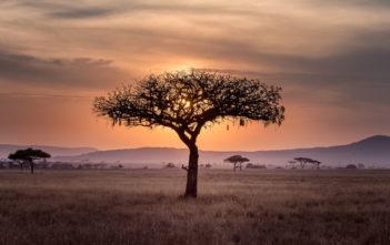 Unser Star in Afrika – Teil 2: Arbeitsschwerpunkte und Buddha-Tempel 2